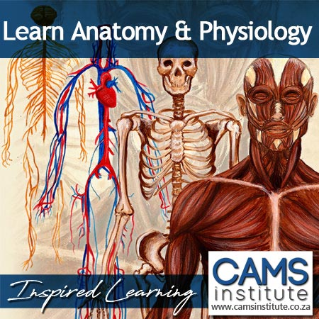 Anatomy and Physiology Certificate Course