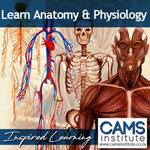 Anatomy and Physiology Course